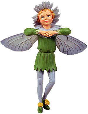 Flower Fairy Aster