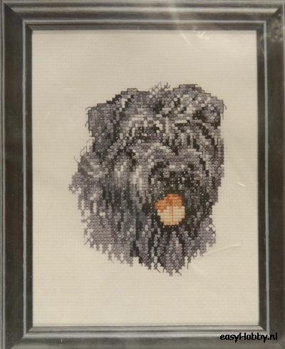Hond, Bouvier