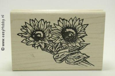 Stempel, Twee zonnenbloemen